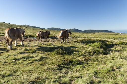 Col de Beal; Auvergne; France; PNR Livradois Forez; horses; Summer