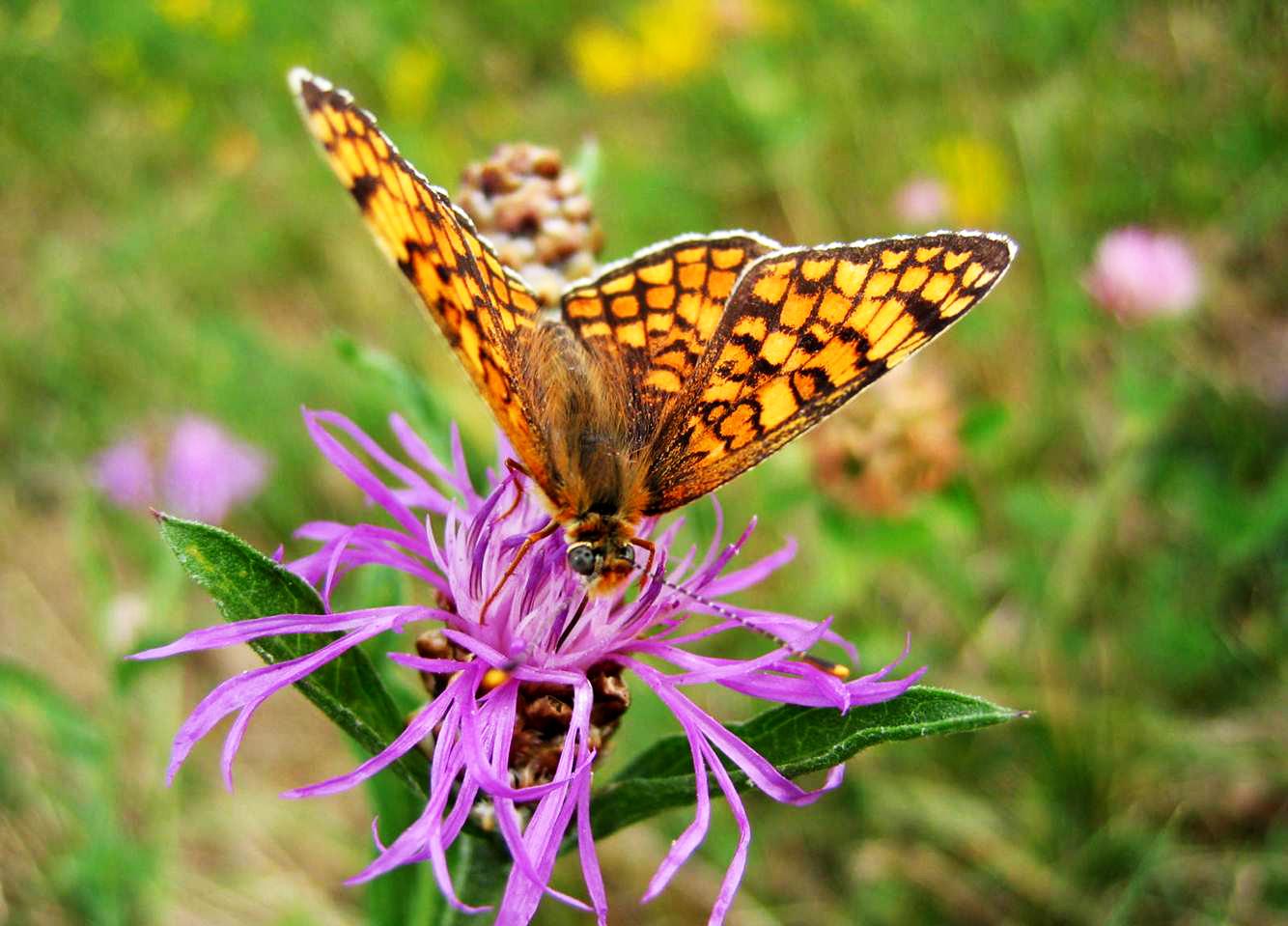 Papillon – La vallée du Fossat