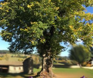 L'arbre aux cristaux