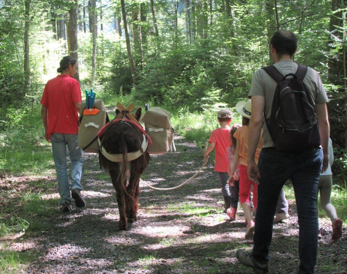 Balade avec l'âne