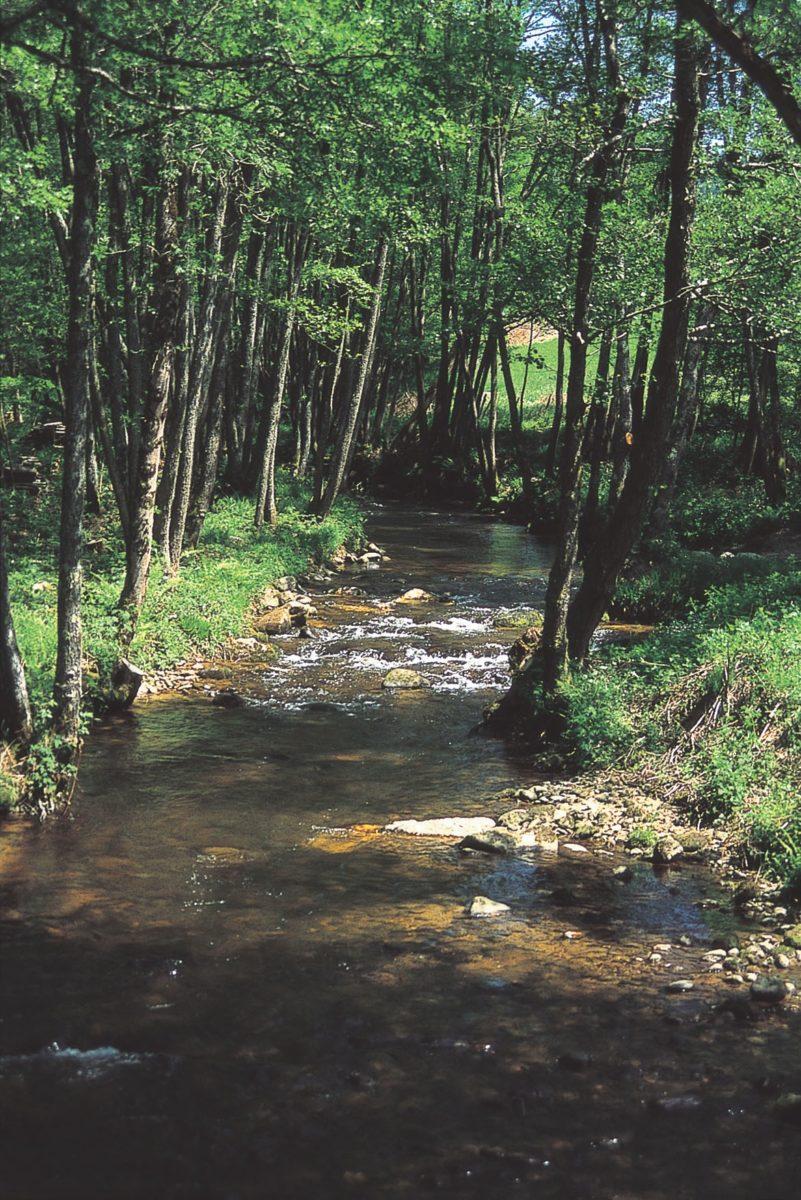 La forêt de montagne, son évolution au cours des âges et ses habitants – Balade famille