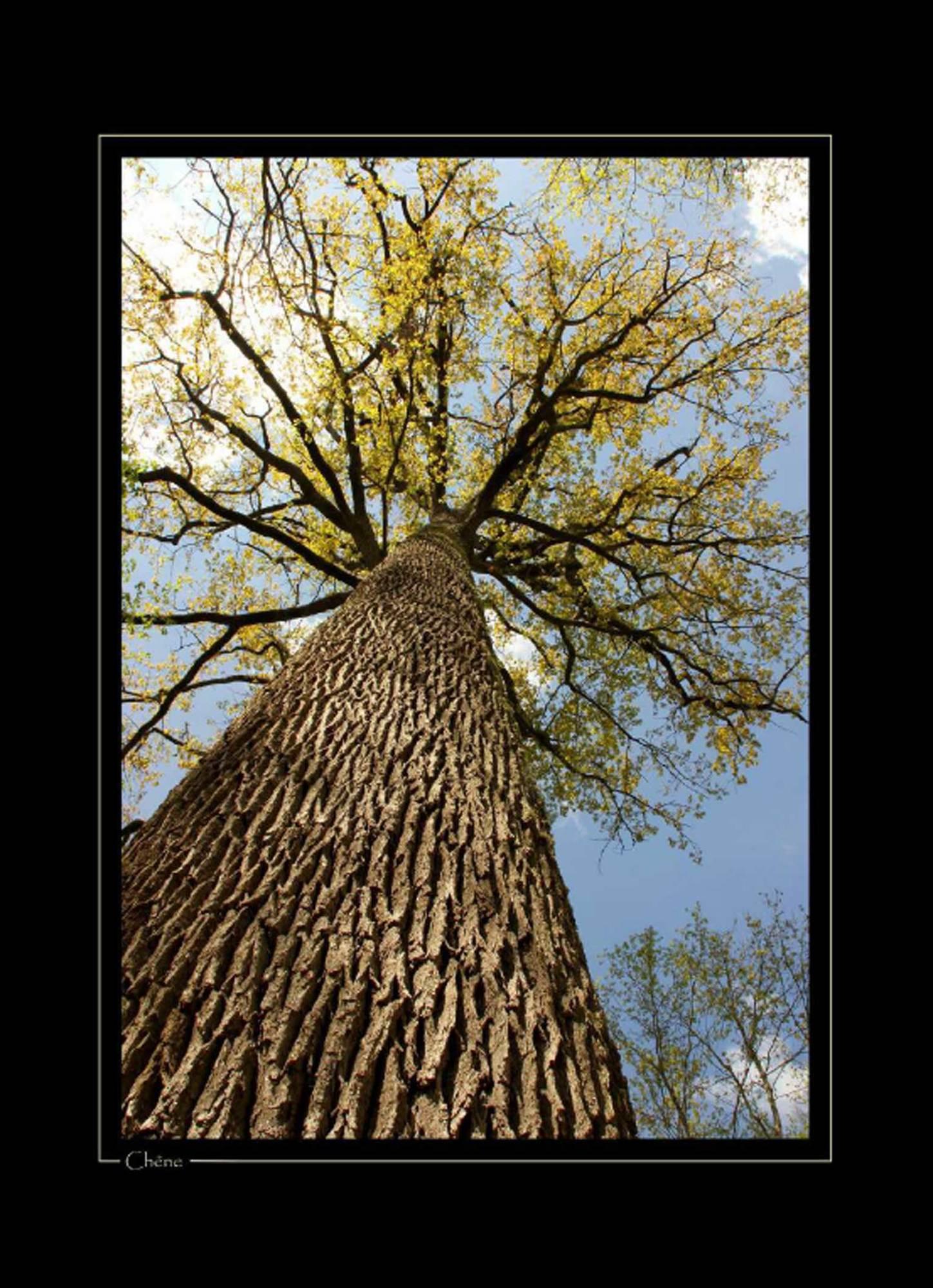 Exposition Dans la peau d'un arbre