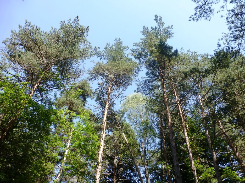 diversité arbres