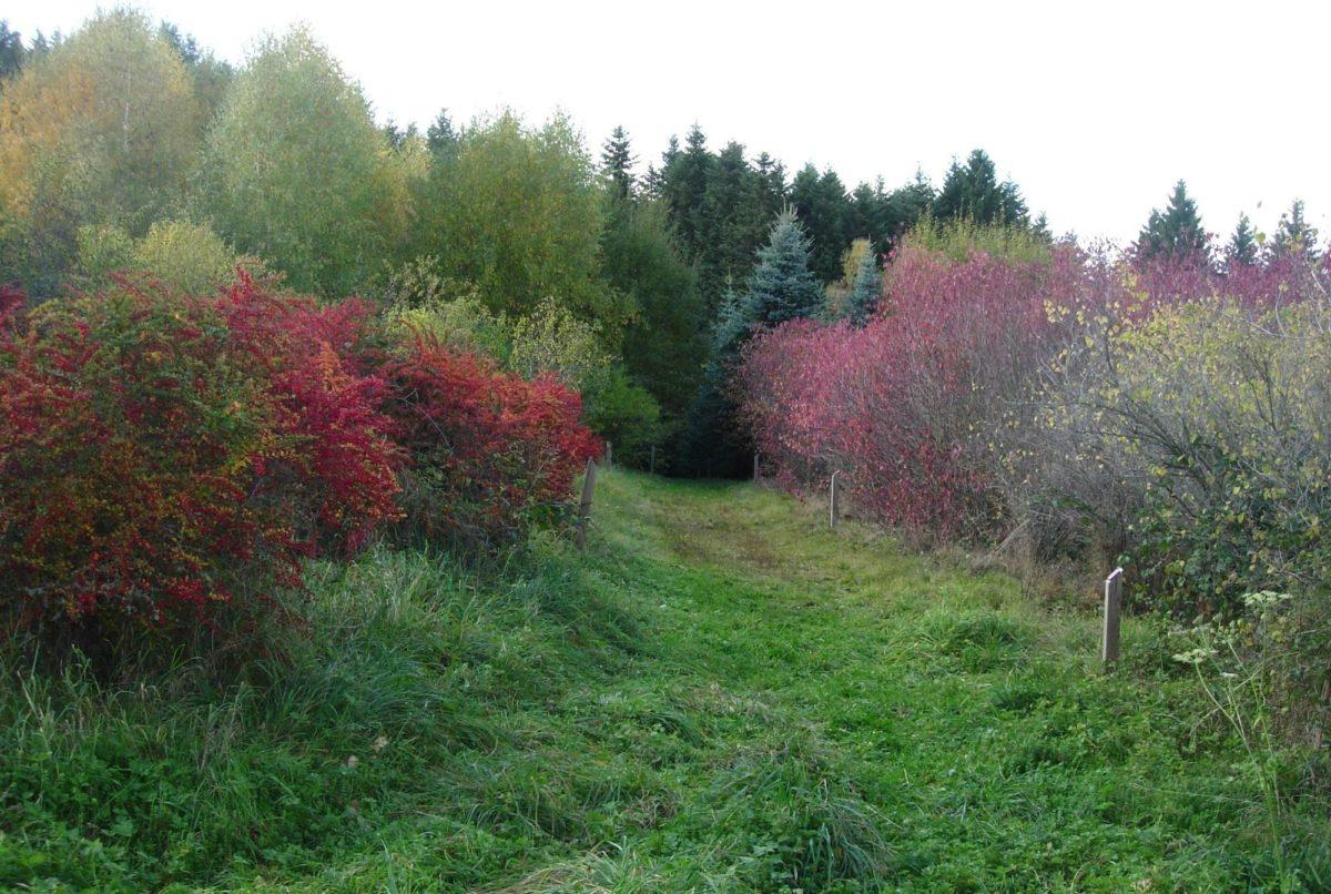 arboretum bis