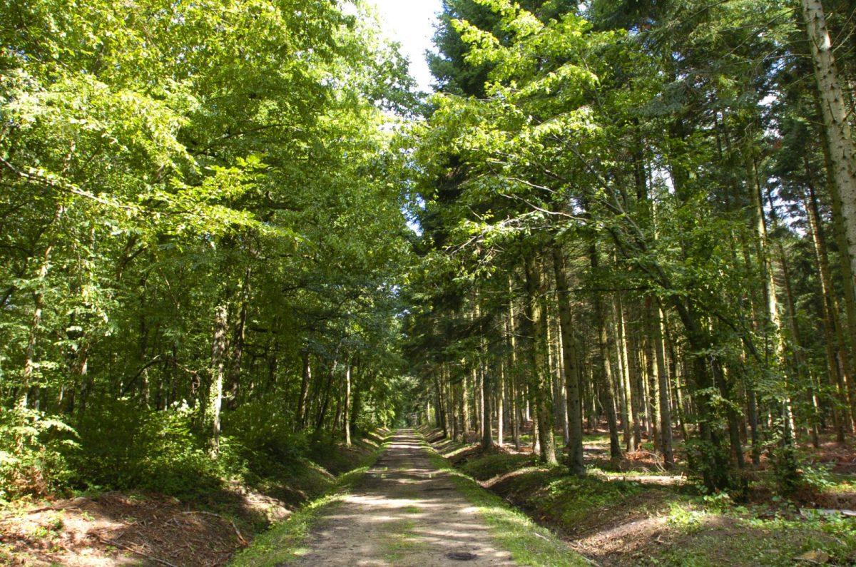 ENS – forêt de la Comté