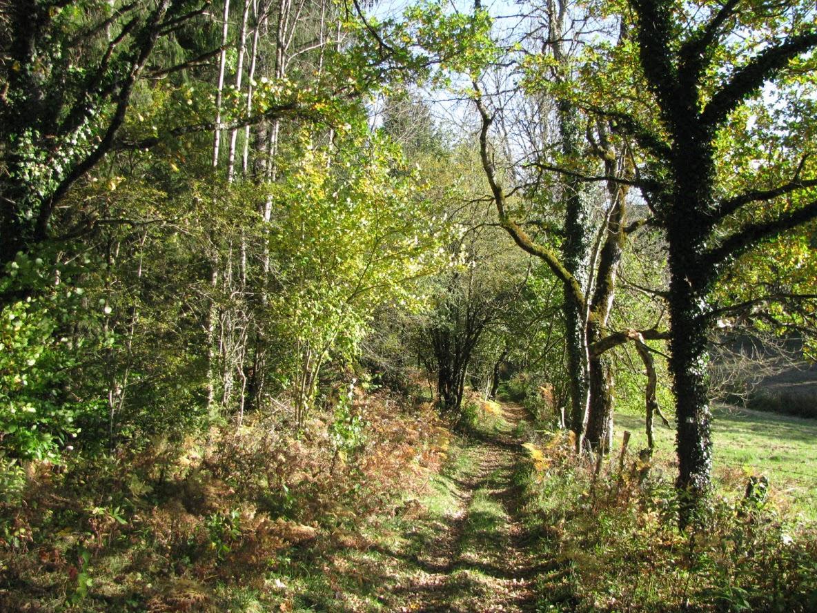Chemin de Montaigne