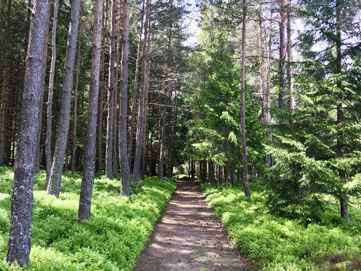 Espace Trail 3