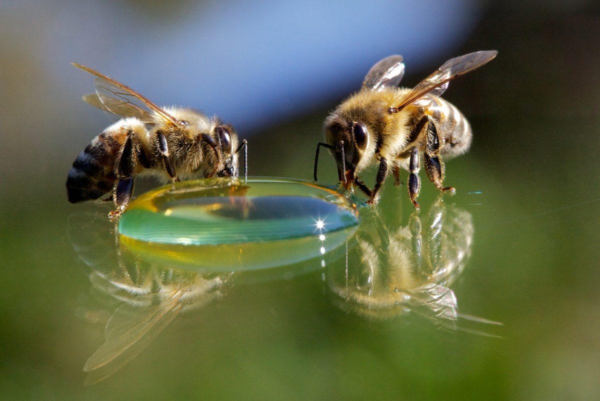 La cité de l'abeille